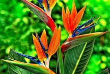 Flowers, plants & trees / Beautiful plants I love to grow.