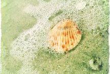 Beach Inspiration / Beach Quotes   Beach Sayings   Beach Photos