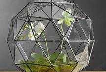 Gardening: Terrariums / Terrariums