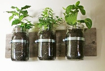 Gardening: Herbs / Everything about herbs and growing them