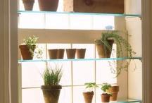 Gardening: Indoor  / Indoor gardening and plants