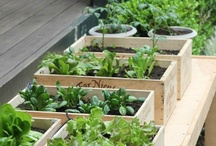 Gardening: Fruit & Vegetable / All about fruit and vegetable gardening