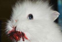 Conigli assassini / Di conigli assassini e affetto a profusione