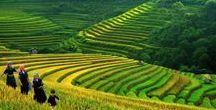 [ VIETNAM ]