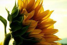 gardening/flowers / by Monica Hernandez-Christophe