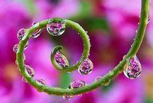 Pretty Little Flowers ^^