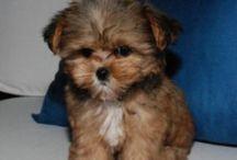 Puppy Love / Puppies