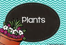 Plants / by Ana Capurro
