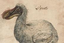 Dodô Bird