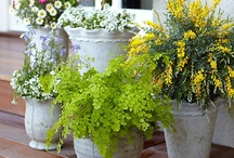 Plants and pots and garden decor / by Deane Brown