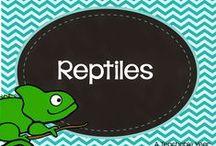 Reptiles / by Ana Capurro