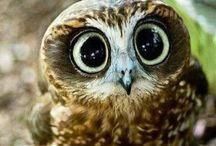Owls!!!