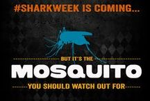 Mosquito Week / While television viewers bask in the excitement of Discovery Channel's annual Shark Week, the truth is that sharks are far from the world's most dangerous creatures. That distinction belongs to the tiny mosquito. Packing a laundry list of dangerous diseases, these miniscule pests outrank all other animals in their threat to human life. Learn how Operation Blessing is battling this lethal enemy during our Mosquito Week! http://www.operationblessing.org/mosquitoweek/ #MosquitoWeek