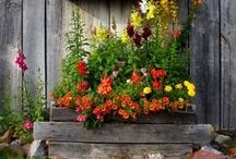 Container Gardens / by Skeeter Bright