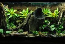 Aquariums, vivariums, Paludariums, Teratiums, & ripariums / Tanks, Inhabitants, Inserts, and Tutorials. Definitions of the things in the title can be found here: http://th02.deviantart.net/fs71/PRE/i/2014/039/1/6/deffs_by_lyra531-d75obut.jpg