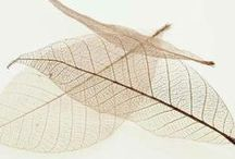 The Leaf as Art / by Jill Marie Greenhill