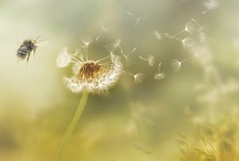 Dandy Dandelions / by Southerly Creations