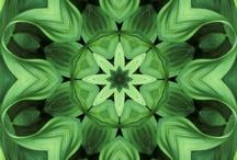 Green / by Carole L