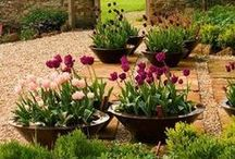 Container Planting / Grow plants and flowers in containers to make the most of your outdoor (and indoor) space!