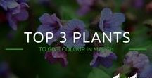 David Domoney's Plant of the Month / Plants that will add colour to your garden across the year!