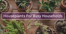 Home Decor using plants / Keep your life and home full of living colour all year round, with ideas from TV Gardener and Designer David Domoney.