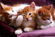 Cats / I love!