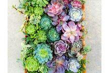 Gardening & Growing