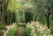 Saara's Secret Garden