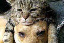 Pets & Animals.  / by Danielle D.