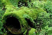 Moss Love
