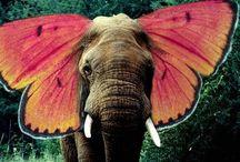 elephantsss <3