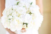 Wedding Photography / by Liz Beaty
