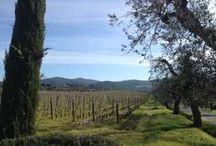 Reportage en Italie / Notre reporter Elodie sur la route des vins italienne pour notre prochain guide online sur WineChicTravel