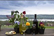 Finger Lakes / A l'ouest de l'état de New York, à deux heures des chutes du Niagara, se trouve l'un des plus importants vignobles du troisième état producteur des Etats-Unis. www.winechictravel.fr/route-vin-finger-lakes
