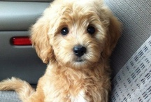 Cutest Pets! / by Alexa Ahlers