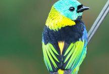 For The Birds / Beautiful birds / by Sally Branderhorst