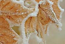 Perlimpinpin ♥ les matins givrés / morning frost / by Perlimpinpin :  Saisir l'émotion