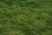 Growing Lawn Grass / Information on growing grass for lawns, sports turf or other grass areas