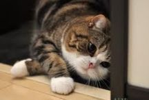 Magnificent Maru / A very funny and loveable cat