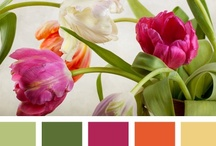 Color My World / I love color!  Especially the amazing color schemes put together by our Creator! / by Debbie Aldridge