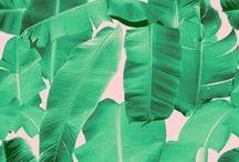Tropical Prints_Hawaii