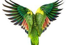 Birds_Feathers
