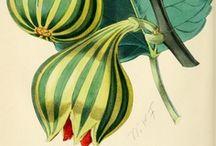 Botanical_Nature / by Longina Phillips