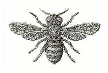 Butterflies_Moths_Bugs