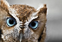 {Owls} / Favorite Animal~ / by Jennifer Berge