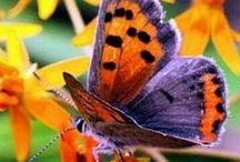 Butterflies / by Joyce Tillery
