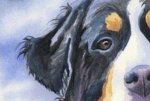 Bernese mountain dogs.... LOVE / by Romy Rohner-Matthiessen