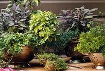Gardening - Houseplants and Container Gardening / by Joyce Tillery