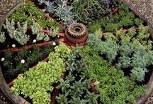 Gardening - Herbs / by Joyce Tillery