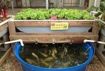 Gardening - Aquaponics / by Joyce Tillery
